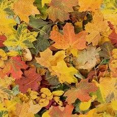 ¡Bienvenido otoño!  Sensaciones #lluvia #hojas  La vuelta de los calcetines  en @socksandco te los llevamos a casa #calcetinesonline